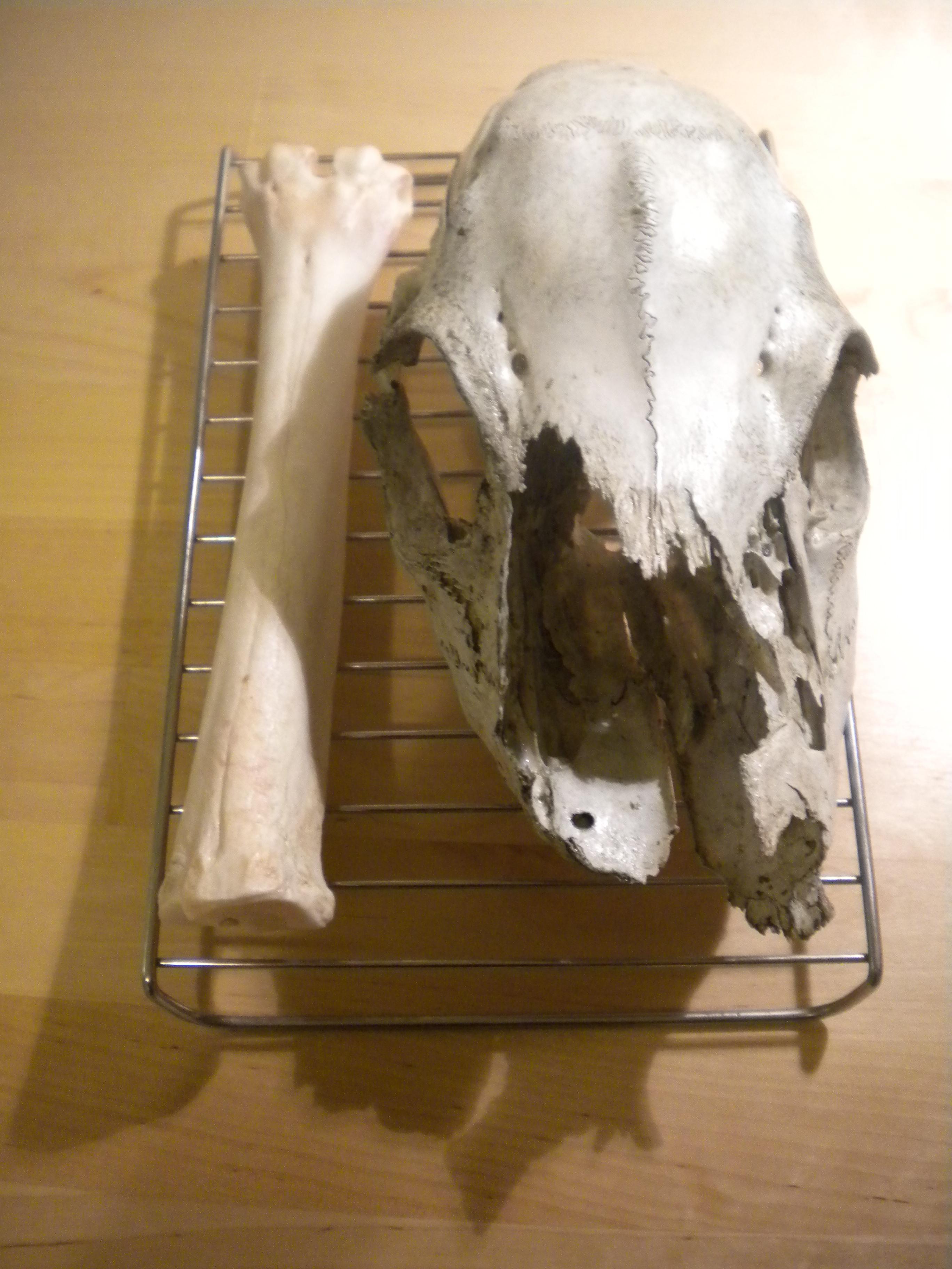 Prepping Animal Skeletons | Bone Broke