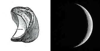 Left: Left lunate, view from the scaphoid. Right: Crescent Moon, view from Earth, presumably.