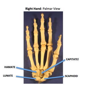 Right Hand Palmar View