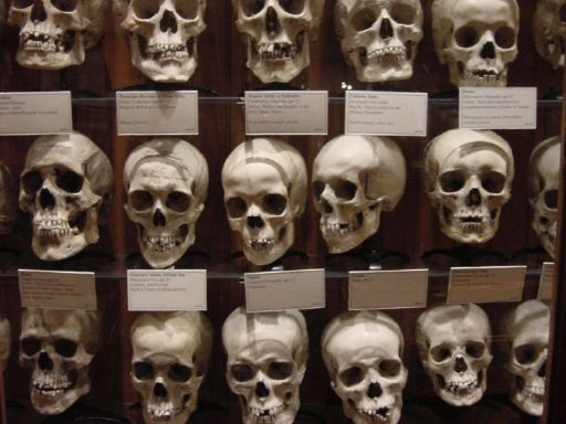Skulls on display at the Mütter Museum in Philadelphia
