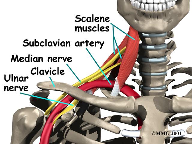 Palpable Anatomy The Subclavian Artery Bone Broke