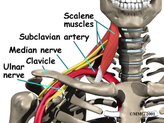 The parts of the subclavian artery are determined by the location of the vessel relative to the anterior scalene muscle.