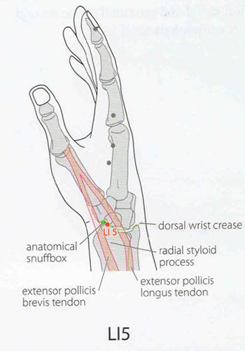 Palpable Anatomy The Anatomical Snuffbox Bone Broke