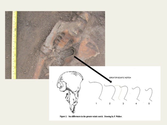 Figure 2. Close-up of the pelvis of the Old Ainsen individual