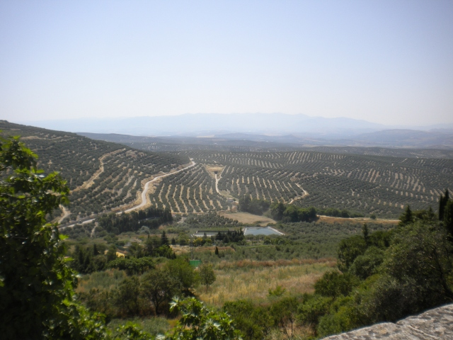 la campesina, the rolling hills of olive fields that characterize this part of Andalucía