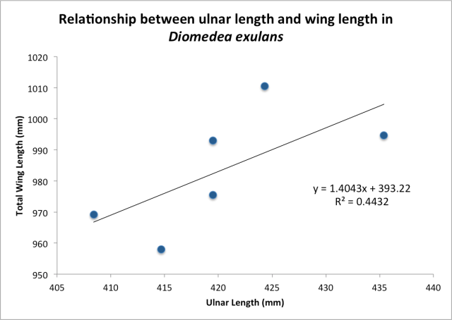 Ulnar Length vs Wing Length, the Wandering Albatross