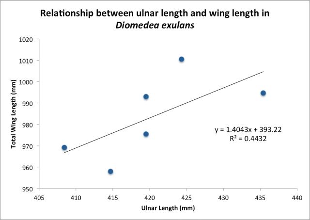 Ulnar Length vs Wing Length, the Wandering Albatross