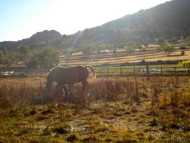 Animal life in Los Atascaderos