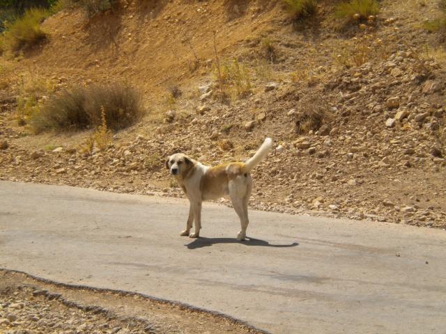 Dapper Chico