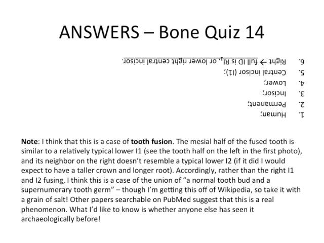 BQ_14_Answers