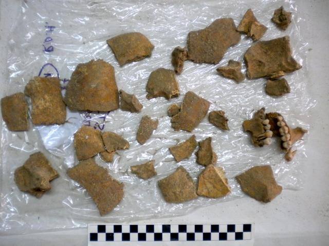 A cornucopia of cranial fragments.