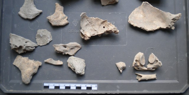 Bone fragments, summer 2013