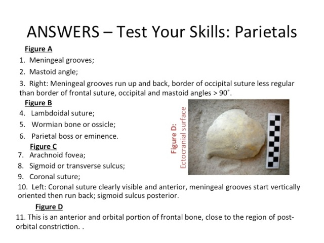 Answers - Test Your Skills: Parietals