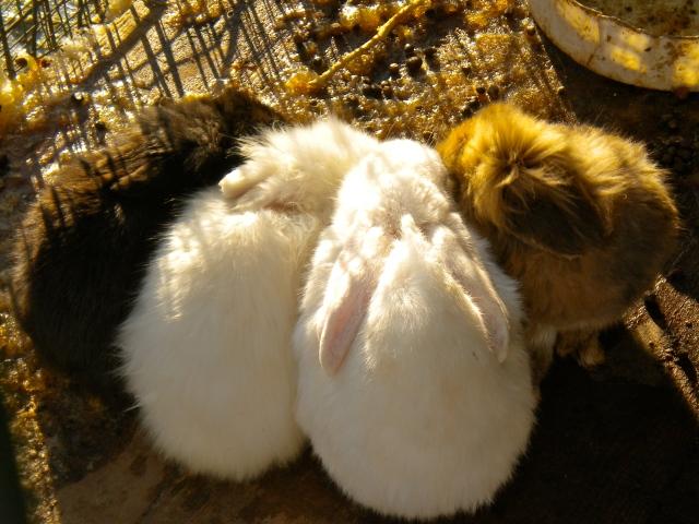 Huddled bunnies at the Kok Tobe Zoo