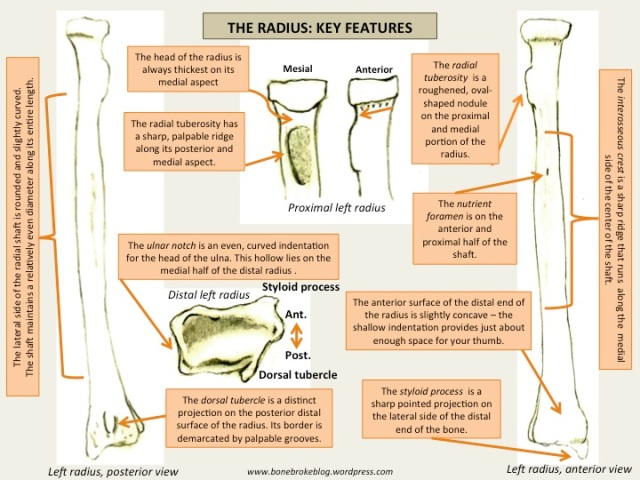 3. Radius Features