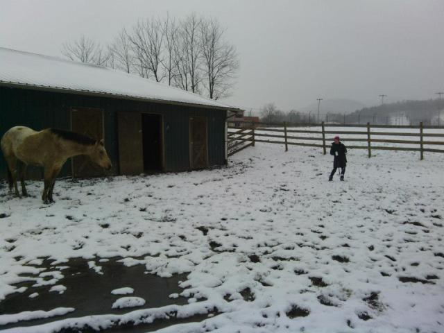 Ashley Schubert conducting resistivity survey in North Carolina (with some curious onlookers) - Winter 2013