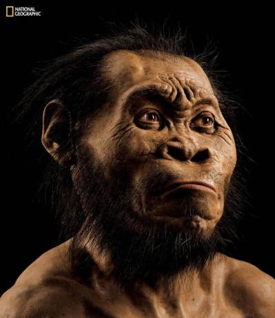 Homo naledi reconstruction by John Gurche.