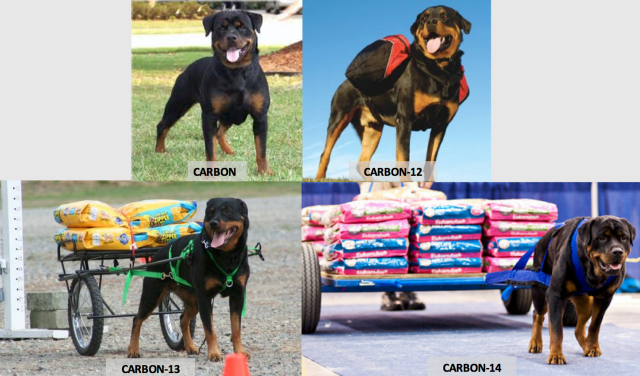 Rottweilers explain isotopes