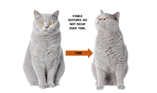 Fat cats remain stable over time