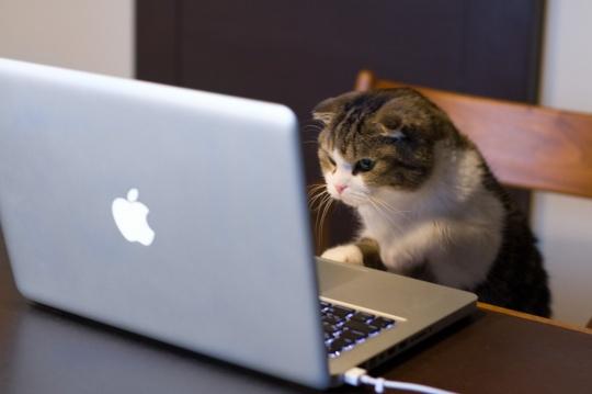 computer_cat