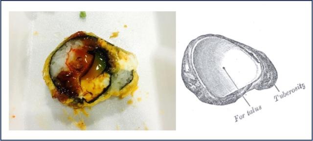 Sushi navicular!