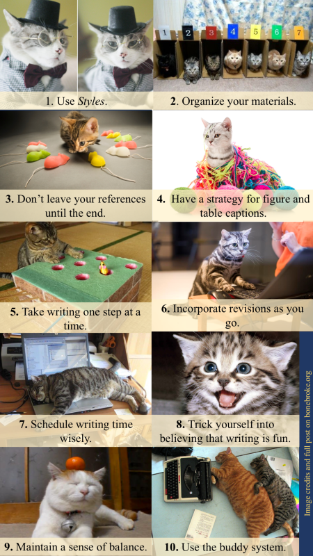 dissertation-writing-tips-as-explained-by-cats