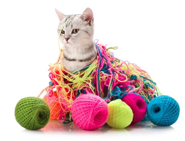 Top Ten Cat Breeds