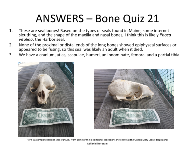 bone-quiz-answers